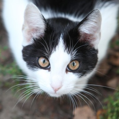Bezdomne psy i koty z Konstancina-Jeziorny